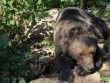 Kuterevo - Bärenreservat