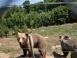 Kutarevo - utočište medvjeda